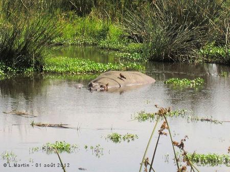 Vers le cratère du Ngorongoro - Tanzanie - L. Martin 01/08/2012