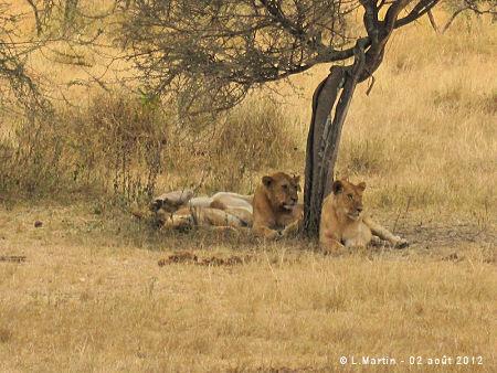 Serengeti - Tanzanie - L. Martin 02/08/2012